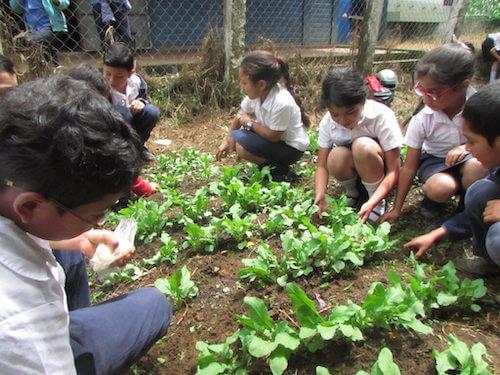 Los huertos escolares en El Salvador, por Ondina Ramos