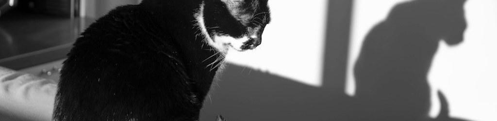 Los gatos muertos del totalitarismo; Alberto Astorga