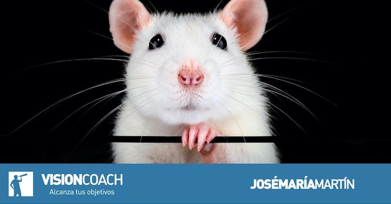 Cabeza de ratón