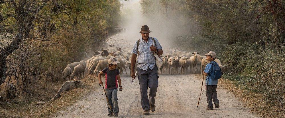 Pastoreando en Extremadura